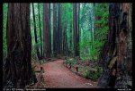 Trail through Cathedral Grove. Muir Woods National Monument, California, USA